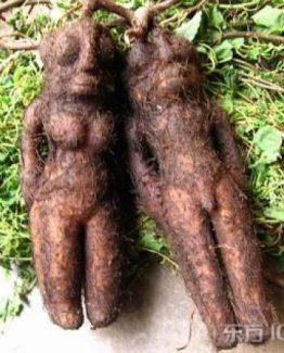Afrodisiakum