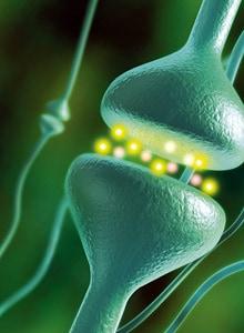 Signalsubstanser - Hormoner