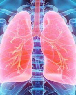 Respirationsorgan / KOL